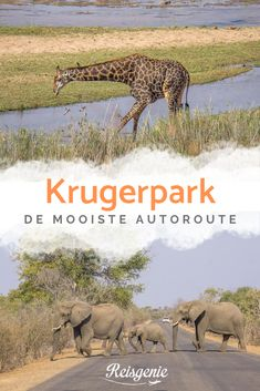 The Kruger Park in South Africa in one day: the most beautiful route by car - Fiji Underwater Hotel, Underwater Restaurant, Honeymoon Essentials, Best Honeymoon Destinations, Honeymoon Pictures, Kruger National Park, South Pacific, Africa Travel, Travel Photographer