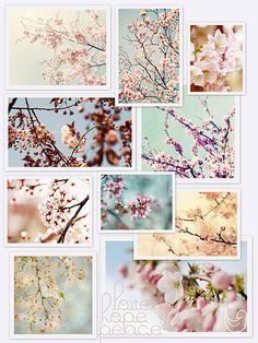 Tribute to Japan - and these gorgeous blossom pictures just feel so hopeful