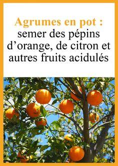 Plantation, Orange, Patience, Bouquets, Vegetables, Decoration, Nature, Gardens, Planting Seeds