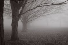 Fog of Trees Black and White by Tracy Parker, via 500px