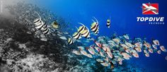 Very colorful dive sites !!! http://www.topdive.com/