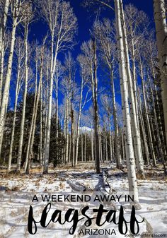 Winter Vacation in Flagstaff, AZ