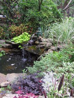 Fotos de Jardines acuáticos