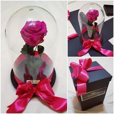 Valentine's day pink purple rose present