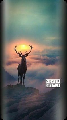 Beautiful Nature Wallpaper, Beautiful Birds, Iphone Wallpaper Planets, Never Settle Wallpapers, Oneplus Wallpapers, Watercolor Landscape Paintings, Moose Art, Smartphone, English
