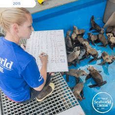 Dedicated SeaWorld employees are continually monitoring the health of the pups affected by the #2015SeaLionCrisis. #365DaysOfRescue