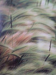 Photo of grass 💟