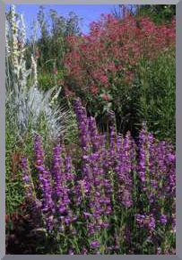 Before U0026 After: Plant Paradise Border | Perennials, Gardens And Garden Ideas