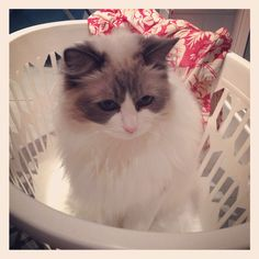 Squiggle in the washing basket~