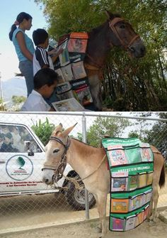 In in the mountains of Trujillo state, Venezuela, the University Valle del Momboy started an unusual service – biblio-mules, These mobile libraries on mules' backs deliver books to the peasant children. Library Page, Mini Library, Little Library, Free Library, Library Design, Kansas City, Mobile Library, Book Spine, Singular