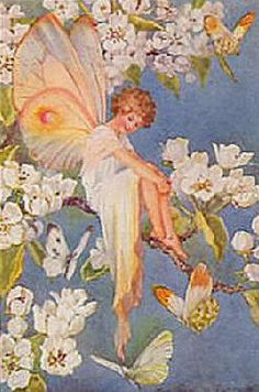 Pear Blossom Fairy  by: Margaret Tarrant