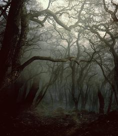 what awaits in the dark forrest?