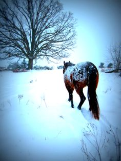 Buckers in snow