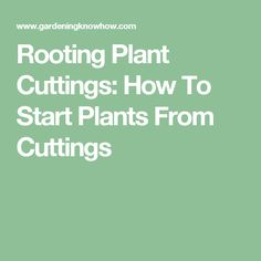 Rooting Plant Cuttings: How To Start Plants From Cuttings