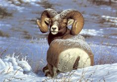 Winter Animals | ... the storm, after, animal, mountain goat, painting, snow, storm, winter