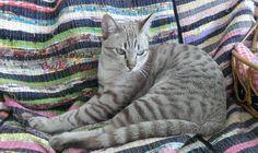 #Kiwi the cat