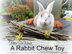 Using all natural items around you, make a rabbit chew toy to help file their teeth. afarmgirlinthemaking.com