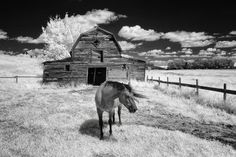 St. Ann's Ranch - Trochu - Alberta Photo by Brad Russell -- National Geographic Your Shot