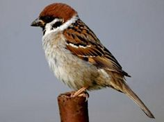 Ahh > Little Birds Song Lyrics xxx Small Birds, Little Birds, Colorful Birds, Pet Birds, Small Canvas Paintings, Animal Paintings, Bird Barn, Barn Owls, Different Types Of Animals
