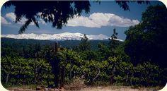 Sierra Vista Vineyards and Winery in Placerville, El Dorado County