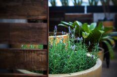 La Fleuriste - Corporativo Google Storage, Plants, Corporate Events, Plant, Planets