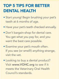 Chew On This: 5 Tips For Better Pet Dental Health