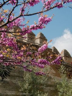 Spring Prelude, Málaga, Andaluzia, Espanha