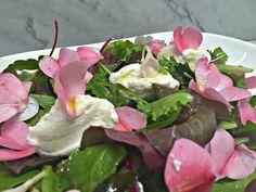 Cronache da un orto: Tu chiamale se vuoi...insalate