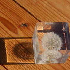 dandelion inside a cube