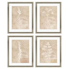 Botanical Framed Print (Set of 4)
