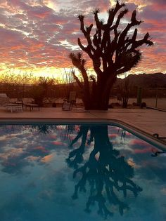 clubmonaco:      The Joshua Tree Inn    There's a beautiful place in the Mojave Desert called The Joshua Tree Inn which rents quirky hacienda style houses. The photo above is an example of one of the views. -Olivia Lopez