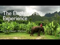 Khao Lak: The Elephant Hills experience, Thailand's Khao Sok National Park Thailand Honeymoon, Thailand Travel, Khao Sok National Park, National Parks, Places To Travel, Places To Visit, Thai Travel, Hotels, Khao Lak
