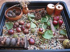 10 Awesome sensory bin ideas for fall--apples, pumpkins, leaves, etc