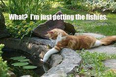 Petting Fishies