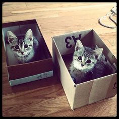 Kittens in Boxes