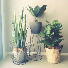 6 The Best Design Of Ornamental Plants At Home – DECOREDO