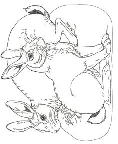 Bunny Rabbit Coloring Pages | Facebook Downloads Click here for a free subscription to janbrett.com