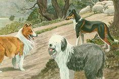 1919 Illustration L. A. Fuertes Peinture animalière Chien Bobtail début 20ème Peintre américain Chiens de berger