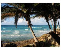 Photo by me. Photo: Diána Rigó Varadero, Cuba #Cuba #Varadero #travel #photography #sea #palms