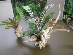 Unique driftwood centerpiece by DriftwoodPlanters on Etsy, $65.00