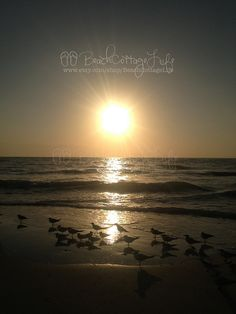 Seagull Sunset | René Marie Photography | Beach Cottage Life | https://www.facebook.com/BeachCottageLifePhotography
