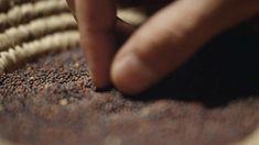 Jésus a expliqué que le royaume des cieux est semblable au plus petit des grain, le grain de sénevé. Quand il pousse, pourtant, il devient...