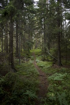 Deep forest by ©Marcel...