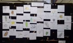 B3's Display Panel - Observing the Nature