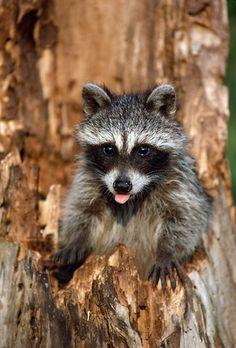 Punx on junk — thecutestofthecute: Here are some sassy animals...    Tumblr