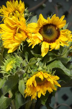I want your life to be full of sunflowers ♥ - malen - Flowers Sunflowers And Daisies, Big Flowers, Flowers Nature, My Flower, Flower Power, Beautiful Flowers, Sunflower Pictures, Sunflower Art, Watercolor Flowers