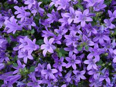 Planting Flowers, Lawn And Garden, Bulb Flowers, Beautiful Flowers, Perennials, Flowers, Perennial Garden, Flower Seeds, Colorful Garden