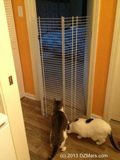 Foiled by the beautiful homemade cat gate! Cat Gate, Cat Fence, Crazy Cat Lady, Crazy Cats, Indoor Dog Gates, Pet Barrier, Cat Room, Cat Furniture, Painted Furniture