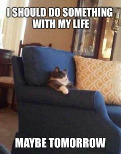 Today is a great day - LOLcats is the best place to find and submit funny cat memes and other silly cat materials to share with the world. We find the funny cats that make you LOL so that you don't have to. I Love Cats, Crazy Cats, Cute Cats, Funny Cats, Funny Animals, Cute Animals, Baby Animals, Funny Shit, The Funny