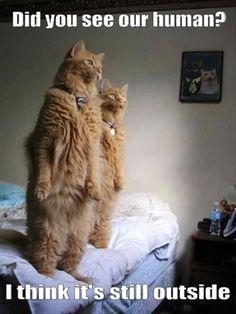 Funny Animal Overload – 55 Pics  ahahha crazy cats